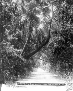 Road to Coconut Grove in early 1900s.